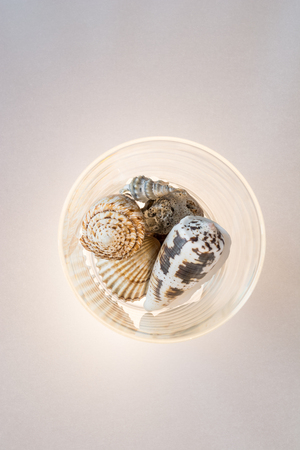 lighted: Sea shells on lighted background, sea shells These are very common on Spanish beaches, and can be found on many beaches with Ease
