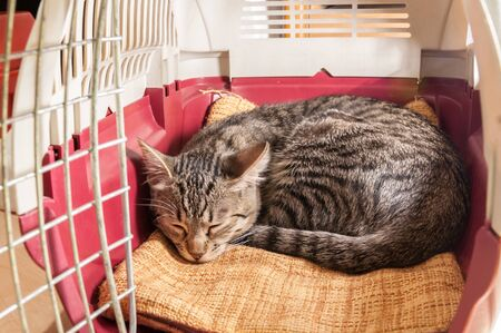 Small female gray cat sleeping into its pet carriert Banque d'images