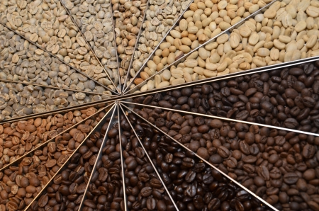 Many varieties of coffee beans photo