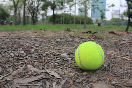 Tennis ball on the ground in the park photo