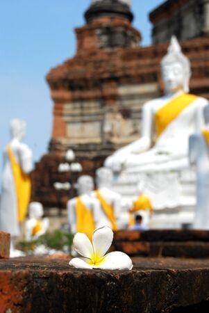 close up Frangipani flower in Buddha statue Background photo