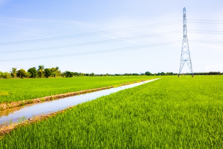 green power: Electric post in the rice field