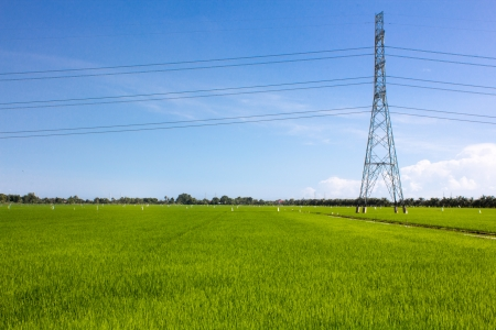 Electric post in the rice field photo