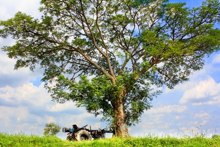 Tree with tractor truck on the grass Stock Photo - 15801926