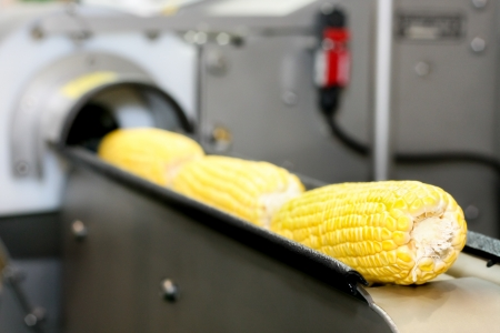 health industry: Closeup of corn production in the rails