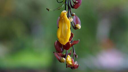 Madeira - Funchal - Jardim Botanico da Madeira - Blooming red and yellow flowers Stock Photo