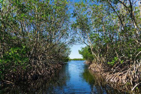 USA, Florida, Way through mangrove forest of everglades