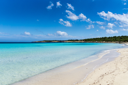 Mallorca, Amazing beautiful white sand beach with green trees behind at Cala Millor