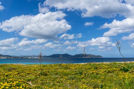 Mallorca, Sun shining on blue sea behind yellow flower field at coast Stock Photo