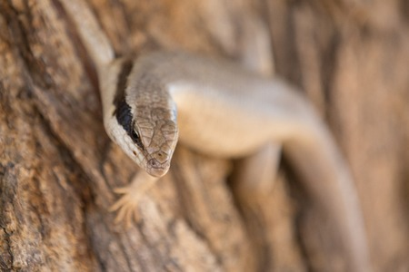 a lizard s sitting in the sun to warm up an and look for food