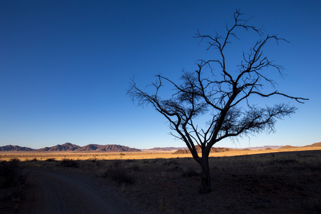 the desert of africa in the sunset with no water and very dry Standard-Bild