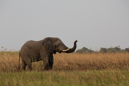 a big elephant family in africa is walking around for eating and drinking water 写真素材