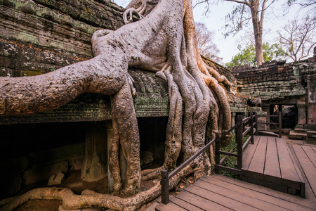 An old temple in cambodia full of plans and trees over grown