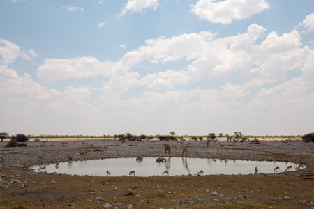 the desert of africa in the sunset with no water and very dry Banco de Imagens