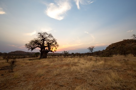 the desert of africa in the sunset with no water and very dry Zdjęcie Seryjne