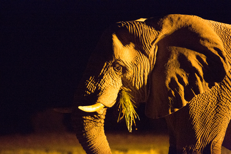 a big elephant family in africa is walking around for eating and drinking water Stok Fotoğraf