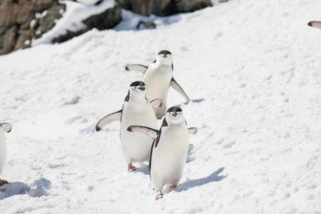 ein paar Pinguine in der Arktis, die am Nordpol herumlaufen und nach den Babys suchen