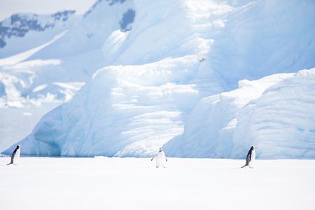 quelques pingouins dans l'Arctique se promenant sur le pôle nord et à la recherche du jeune bébé