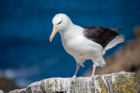 a sea gull is living in antarctica and is looking for some food