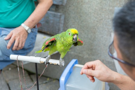 a very intelligent parrot is sitting as a home pet Banco de Imagens