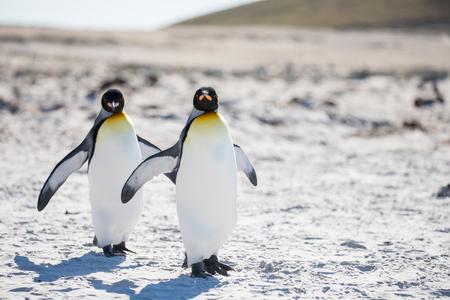 unos pingüinos en el ártico caminando por el polo norte y buscando el bebé