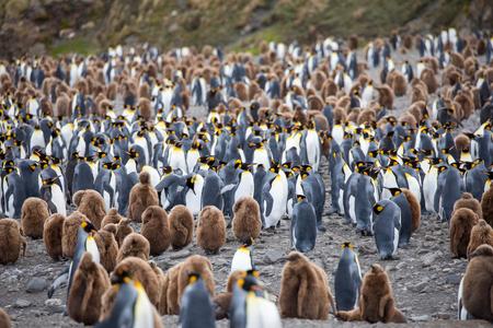 unos pingüinos en el ártico caminando por el polo norte y buscando el bebé Foto de archivo
