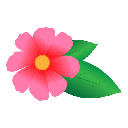 margerite: Pink Flower With Green Leaves | Vector Illustration