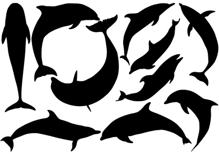 Dolphins silhouettes on white background