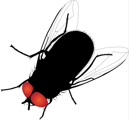 House fly  silhouette on white background Illustration