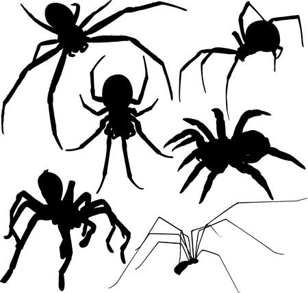 Araña siluetas sobre fondo blanco