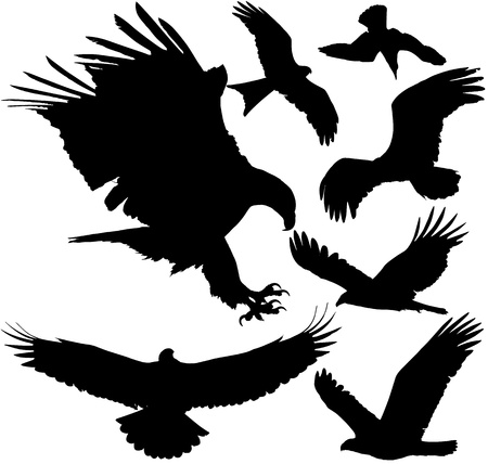 Predator birds eagle, hawk, griffon vulture etc. Illustration
