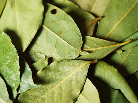 commercial medicine: macro bay leaves for kitchen Stock Photo