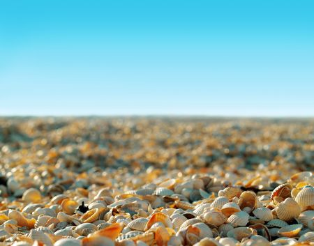 many shells on sunny beach on blue sky background in the morning photo