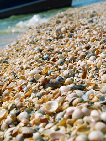 many shells on the beach photo