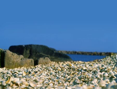 many shells on the beach on blue sky background in the morning photo