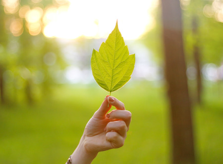Hand holding a maple leaf in the sun. Leaf in hand in the Sunny forest.