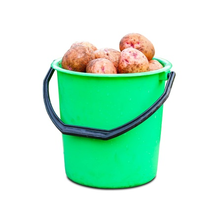 Green plastic bucket with fresh potato crop. Close up. Isolated on white background