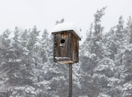 Birdhouse in winter. House for birds under the snow. Close up.