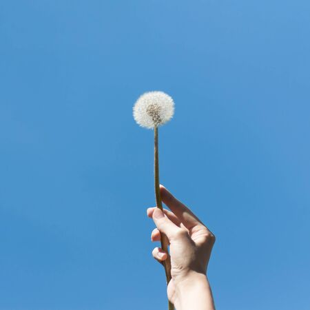 Hand holding a white dandelion against the blue sky. Close up.