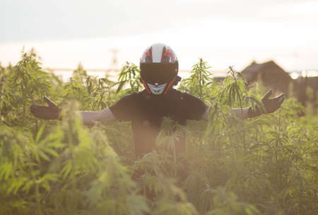 A man wearing a helmet stands in the midst of wild hemp. Close up.