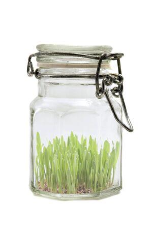jarra: Frasco de vidrio con c�sped sobre un fondo blanco