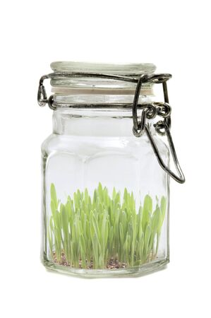 Glass jar with grass on a white background