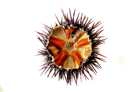 gonads: Purple sea urchin roe on a white background Stock Photo
