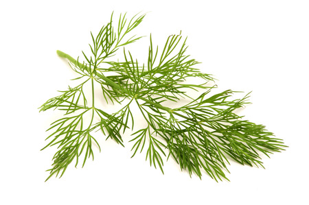 cut outs: Dill on a white background