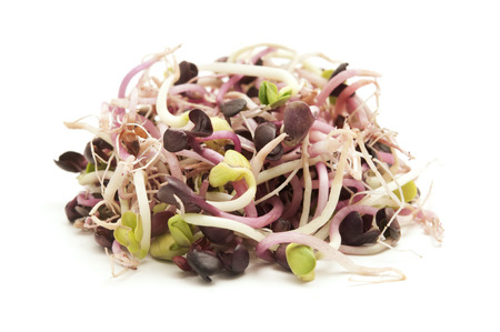 sprouted: Sprouted red radish seeds on a white background Stock Photo