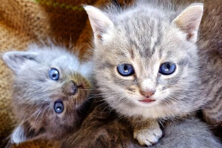 felis silvestris catus: Close up shot of a couple of small kittens Stock Photo