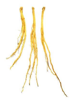 codonopsis roots: Dang shen Stock Photo