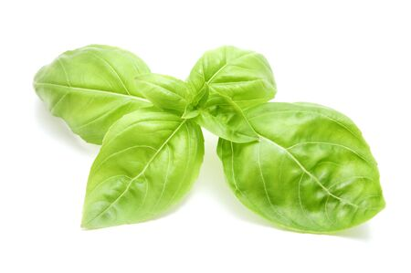 basil herb: Sweet basil leaves on a white background