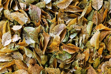 rotting: Close up shot of some rotting leaves Stock Photo