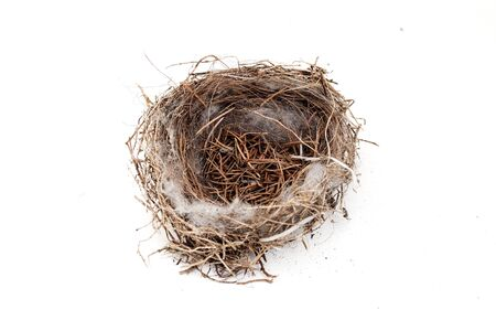 Empty bird nest on a white background Stock Photo